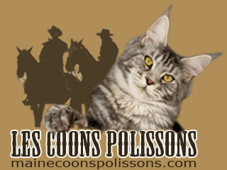 maine coons polissons